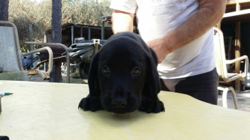 Hound Dog.