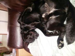 How we sleep