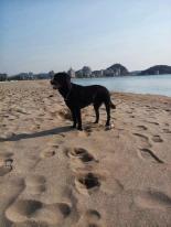 SJ Beach