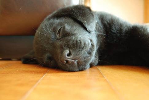 small sleepy me