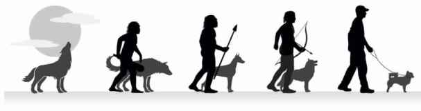 evolution-of-man-and-dog